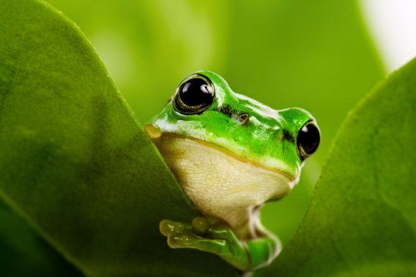青蛙又不是傻逼!